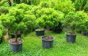 Питомник декоративных растений