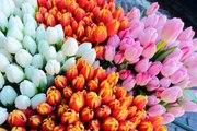тюльпаны и гиацинты 8 марта