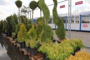Растения для озеленения и ландшафтного дизайна