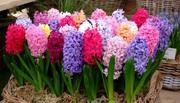 цветы и растения для сада