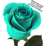 Бирюзовые розы купить в Минске