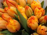Тюльпаны оптом к 8 Марта от производителя